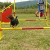 agility1