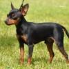 Vagabund_Proper_puppy